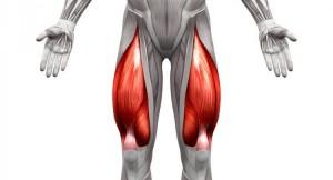 quadriceps-e1490101685572